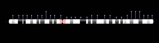 chromosome 7 ideogram