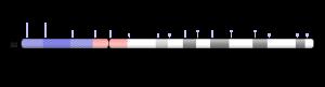 chromosome 22 ideogram