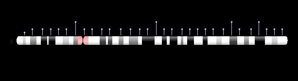 Chromosome 5 Ideogram