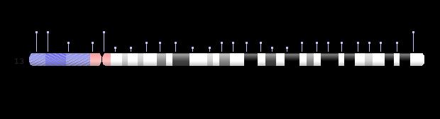 Chromosome 13