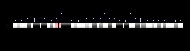 Chromosome 12