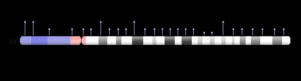 chromosome 15