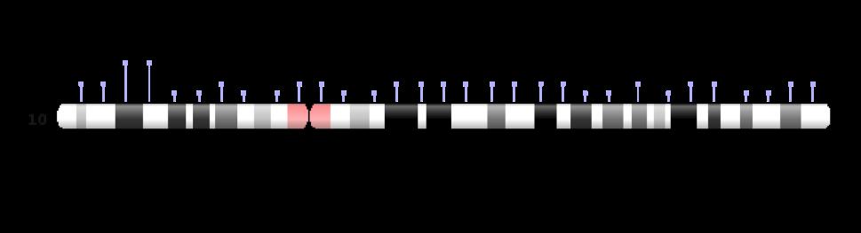 chromosome 10
