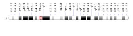 chromosome 12 ideogram